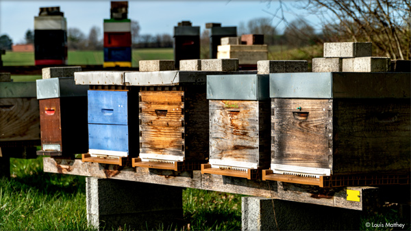 Ruches de Thomas Lüthi, apiculteur bio.